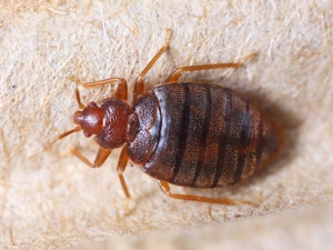 Get Rid of Bed Bugs South Shore MA